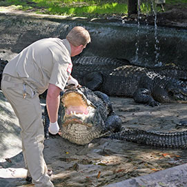 Alligator Farm & Zoological Park